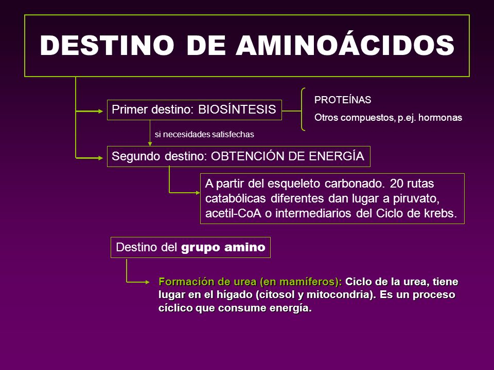 DESTINO DE AMINOÁCIDOS