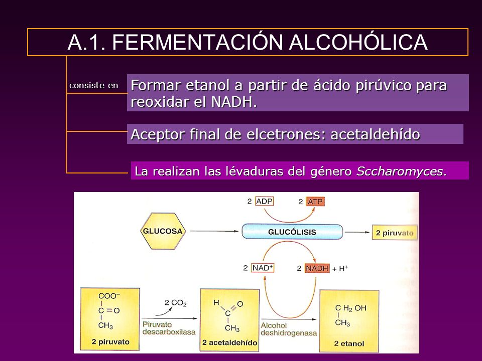 A.1. FERMENTACIÓN ALCOHÓLICA