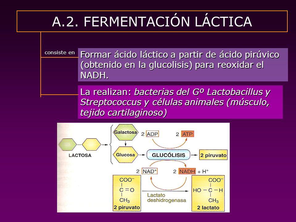 A.2. FERMENTACIÓN LÁCTICA