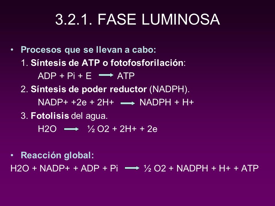 3.2.1. FASE LUMINOSA Procesos que se llevan a cabo: