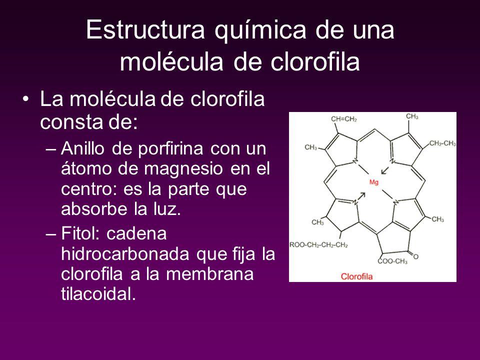 Estructura química de una molécula de clorofila