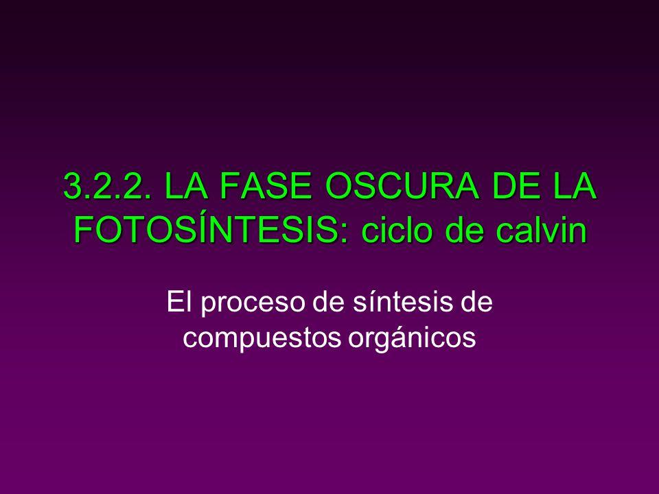3.2.2. LA FASE OSCURA DE LA FOTOSÍNTESIS: ciclo de calvin