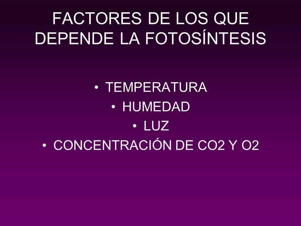 FACTORES DE LOS QUE DEPENDE LA FOTOSÍNTESIS