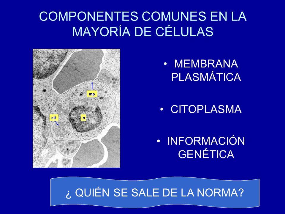COMPONENTES COMUNES EN LA MAYORÍA DE CÉLULAS