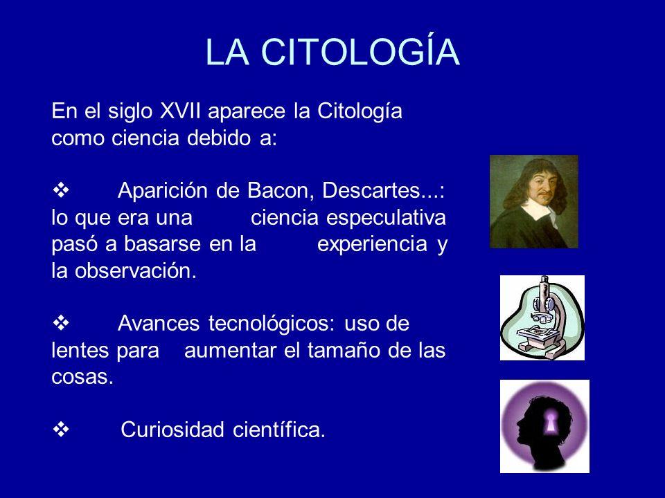 LA CITOLOGÍA En el siglo XVII aparece la Citología como ciencia debido a: