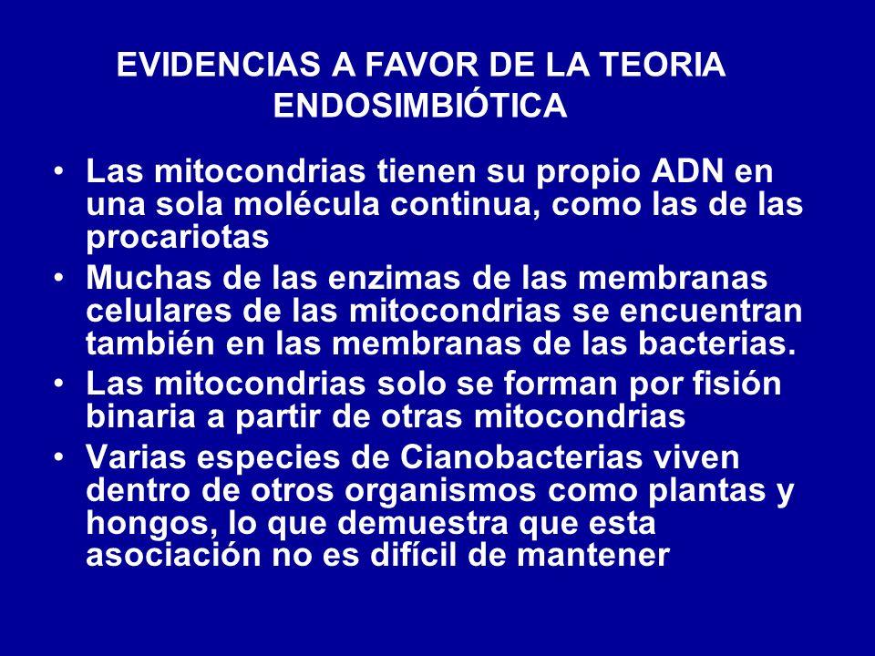 EVIDENCIAS A FAVOR DE LA TEORIA ENDOSIMBIÓTICA