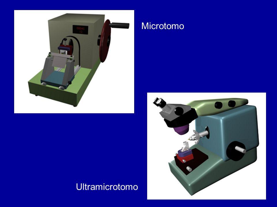 Microtomo Ultramicrotomo