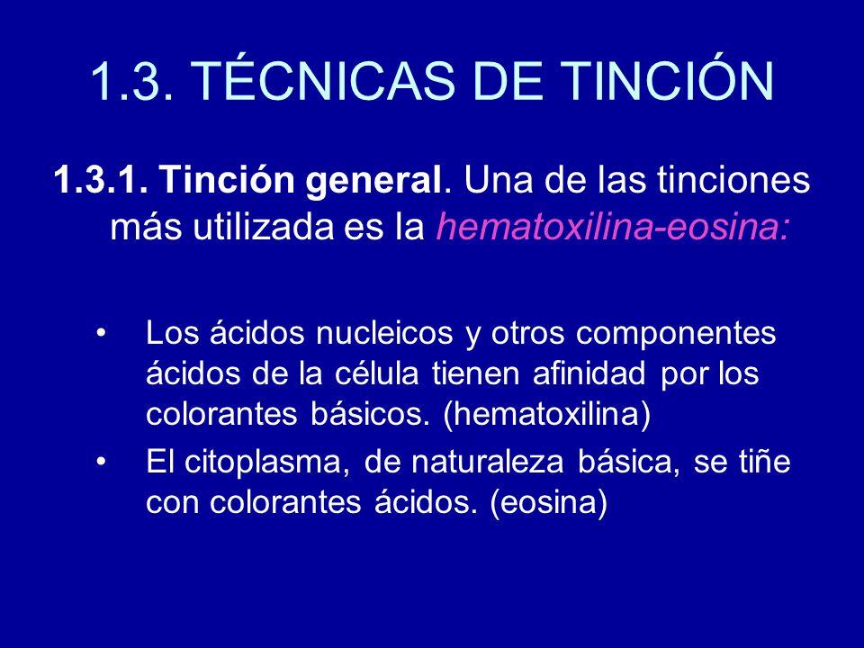 1.3. TÉCNICAS DE TINCIÓN 1.3.1. Tinción general. Una de las tinciones más utilizada es la hematoxilina-eosina: