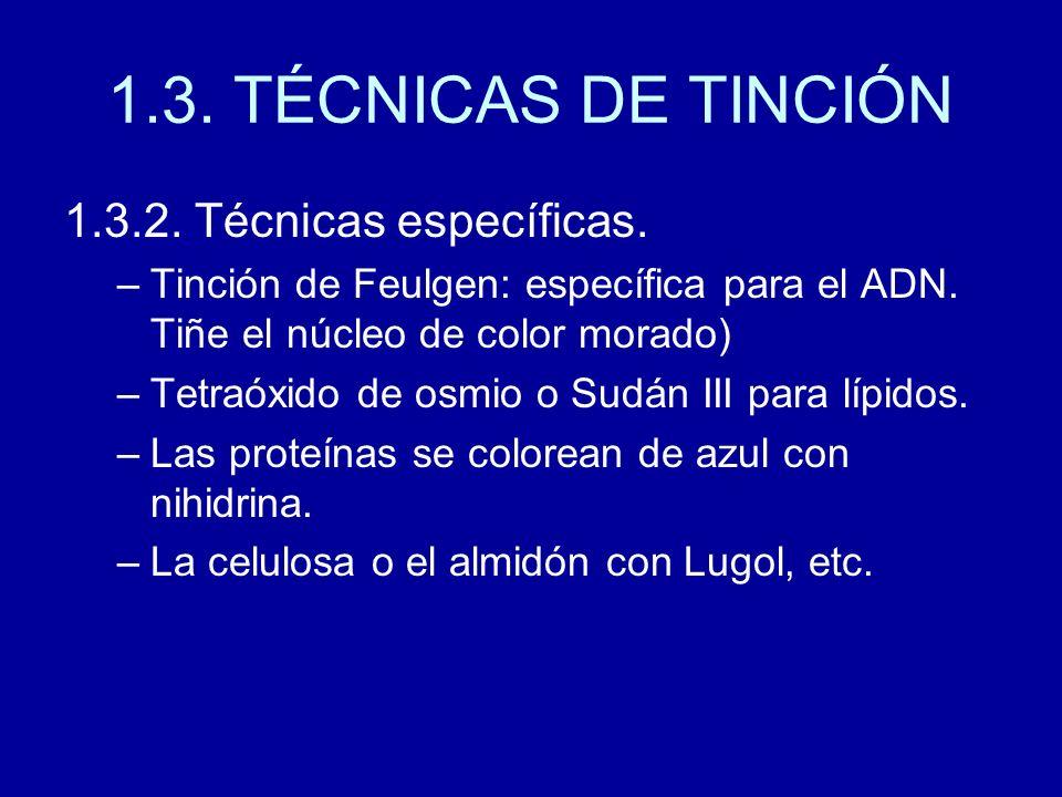 1.3. TÉCNICAS DE TINCIÓN 1.3.2. Técnicas específicas.