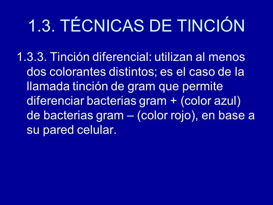1.3. TÉCNICAS DE TINCIÓN