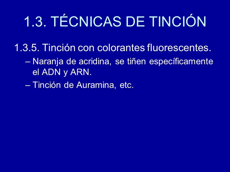 1.3. TÉCNICAS DE TINCIÓN 1.3.5. Tinción con colorantes fluorescentes.