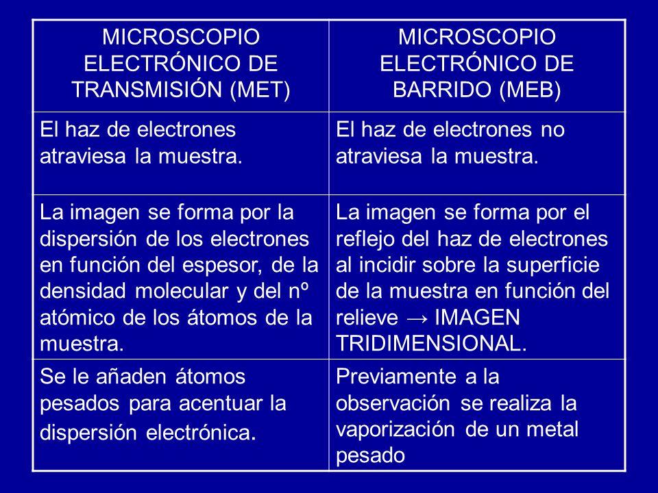 MICROSCOPIO ELECTRÓNICO DE TRANSMISIÓN (MET)