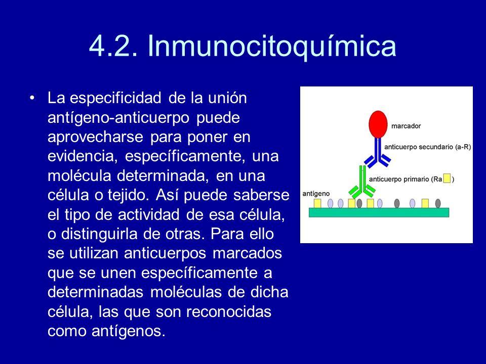 4.2. Inmunocitoquímica