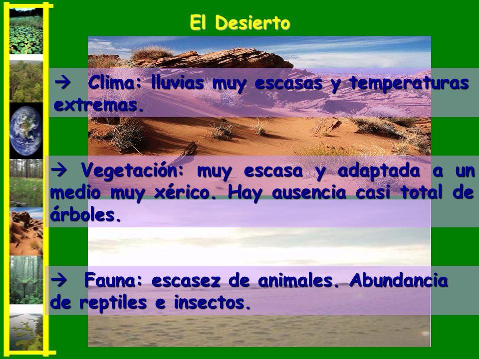El Desierto  Clima: lluvias muy escasas y temperaturas extremas.