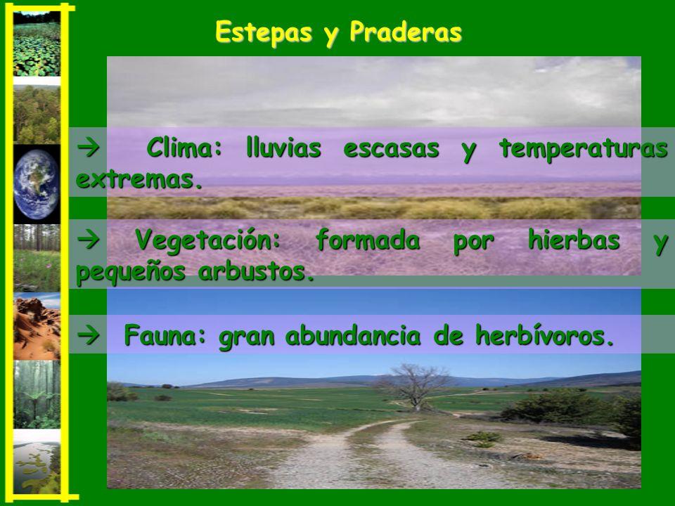 Estepas y Praderas  Clima: lluvias escasas y temperaturas extremas.  Vegetación: formada por hierbas y pequeños arbustos.
