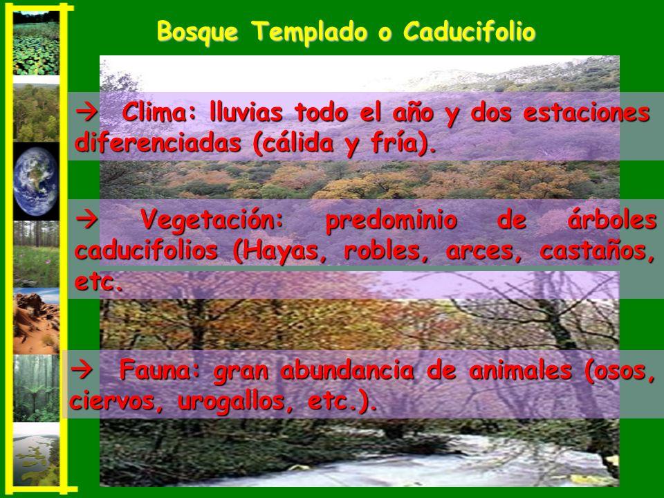Bosque Templado o Caducifolio