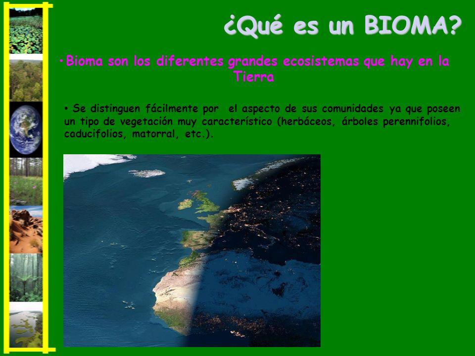 •Bioma son los diferentes grandes ecosistemas que hay en la Tierra