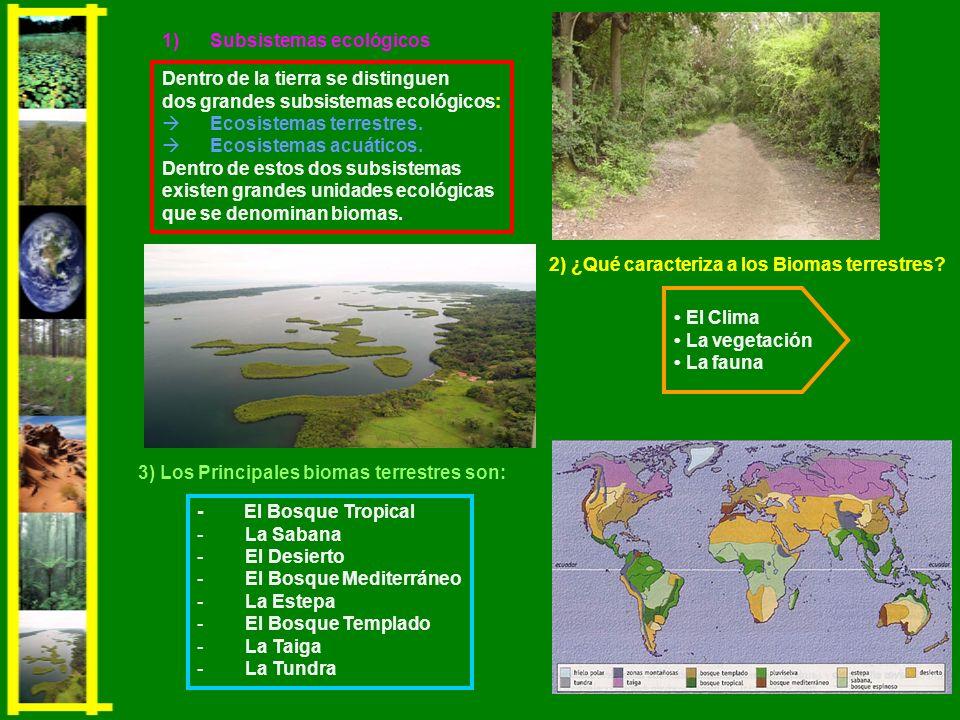 2) ¿Qué caracteriza a los Biomas terrestres