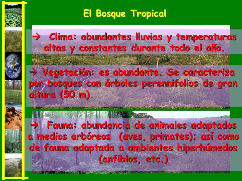 El Bosque Tropical  Clima: abundantes lluvias y temperaturas altas y constantes durante todo el año.
