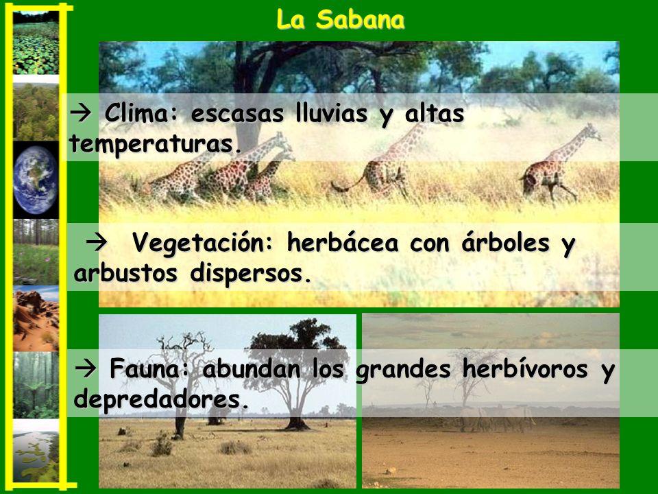 La Sabana  Clima: escasas lluvias y altas temperaturas.  Vegetación: herbácea con árboles y arbustos dispersos.