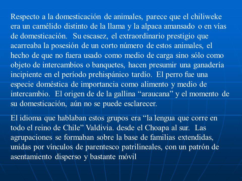 Respecto a la domesticación de animales, parece que el chiliweke era un camélido distinto de la llama y la alpaca amansado o en vías de domesticación. Su escasez, el extraordinario prestigio que acarreaba la posesión de un corto número de estos animales, el hecho de que no fuera usado como medio de carga sino sólo como objeto de intercambios o banquetes, hacen presumir una ganadería incipiente en el período prehispánico tardío. El perro fue una especie doméstica de importancia como alimento y medio de intercambio. El origen de de la gallina araucana y el momento de su domesticación, aún no se puede esclarecer.