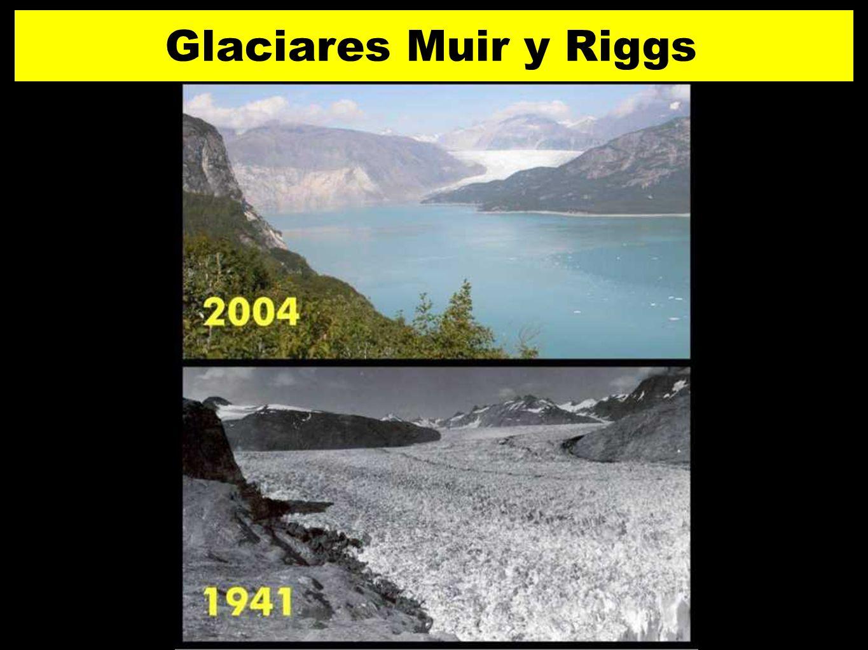 Glaciares Muir y Riggs 28 2828