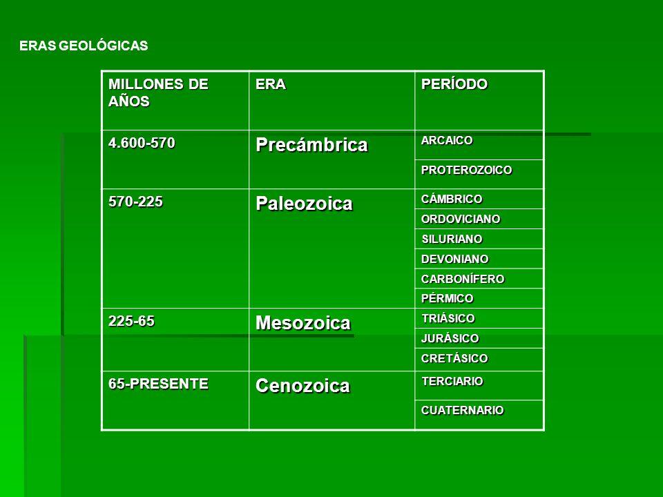 Precámbrica Paleozoica Mesozoica Cenozoica MILLONES DE AÑOS ERA