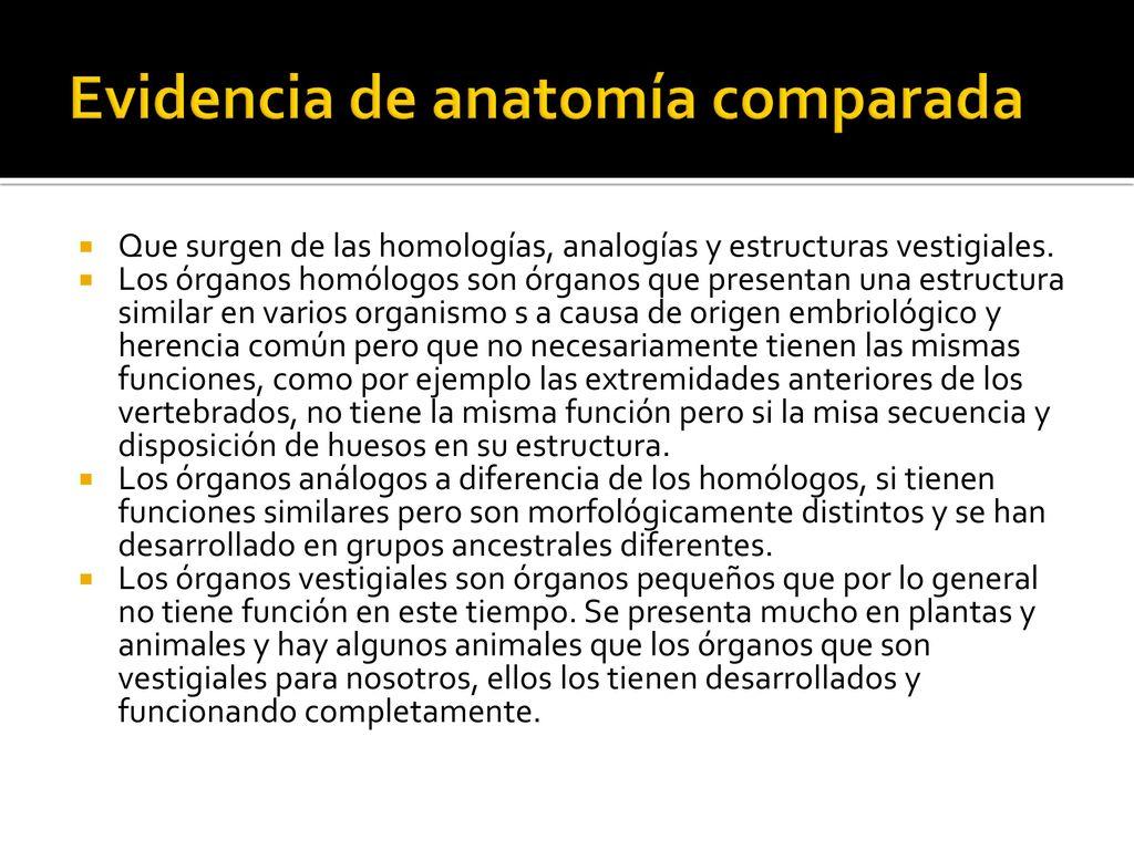 Contemporáneo Ejemplos De Anatomía Comparada Adorno - Anatomía de ...