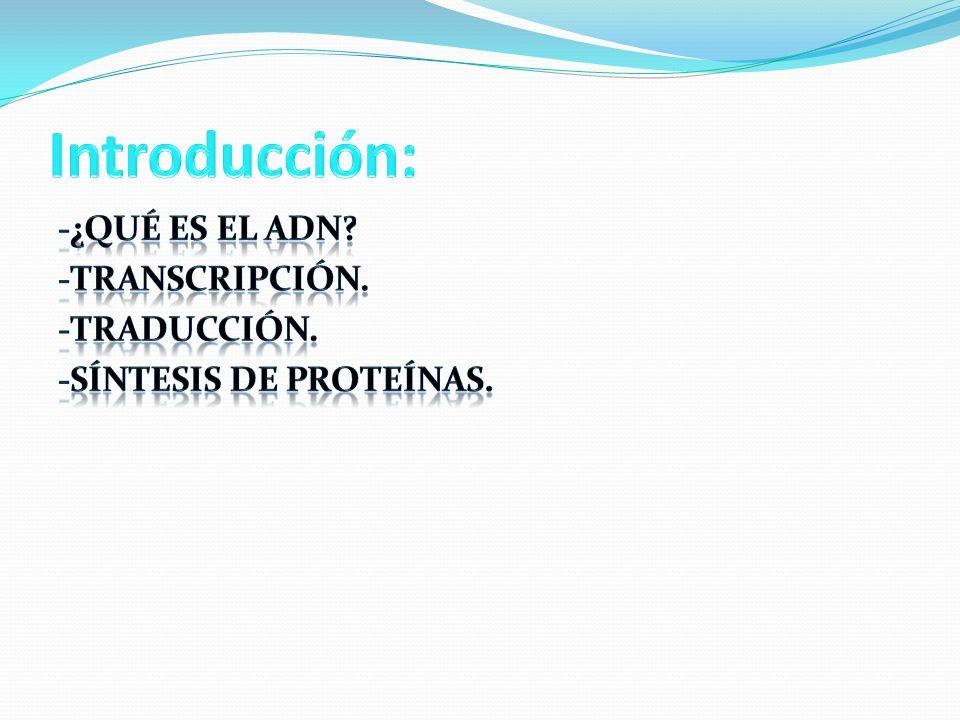 Introducción: -¿Qué es el ADN -Transcripción. -Traducción.