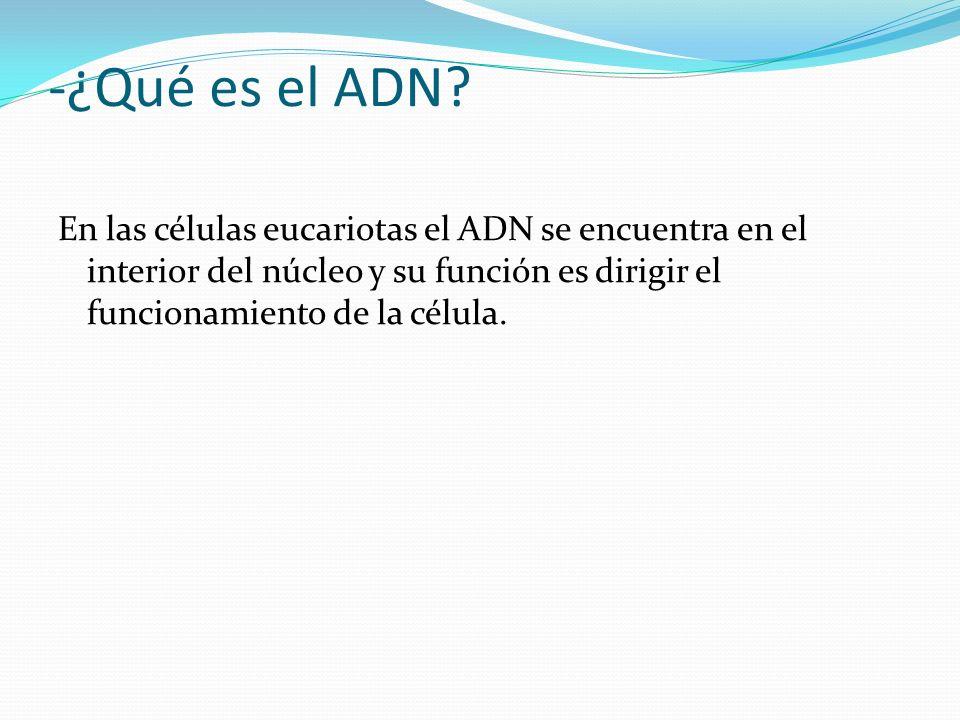 -¿Qué es el ADN.