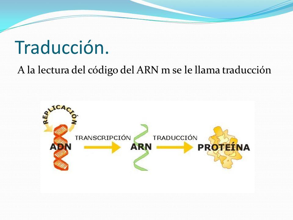 Traducción. A la lectura del código del ARN m se le llama traducción