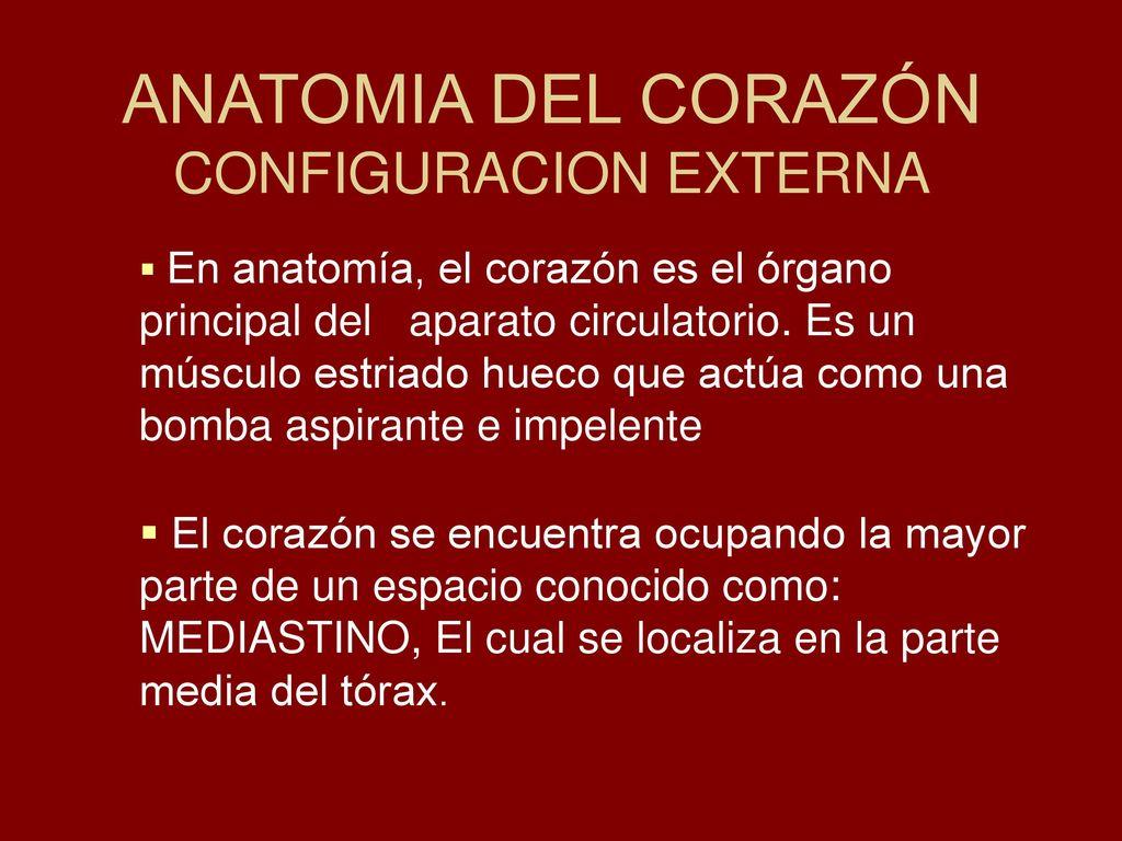 Lujoso Anatomía Del Tiburón Interna Viñeta - Anatomía de Las ...
