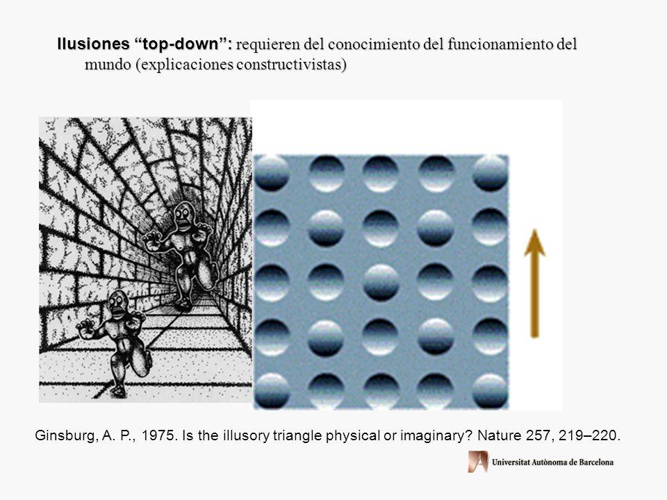 Ilusiones top-down : requieren del conocimiento del funcionamiento del mundo (explicaciones constructivistas)
