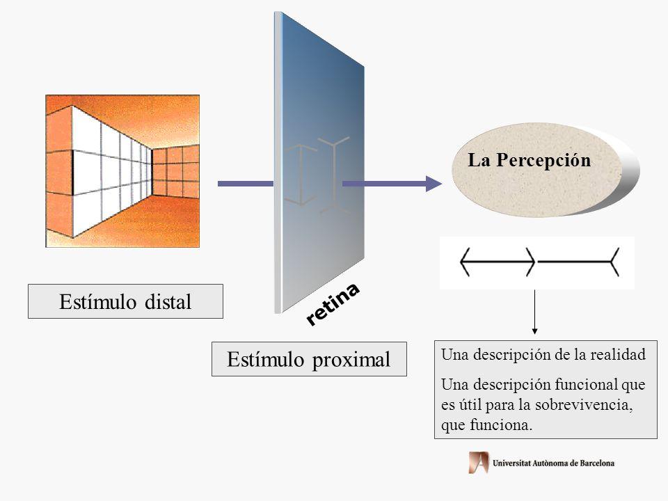 Estímulo distal Estímulo proximal La Percepción retina