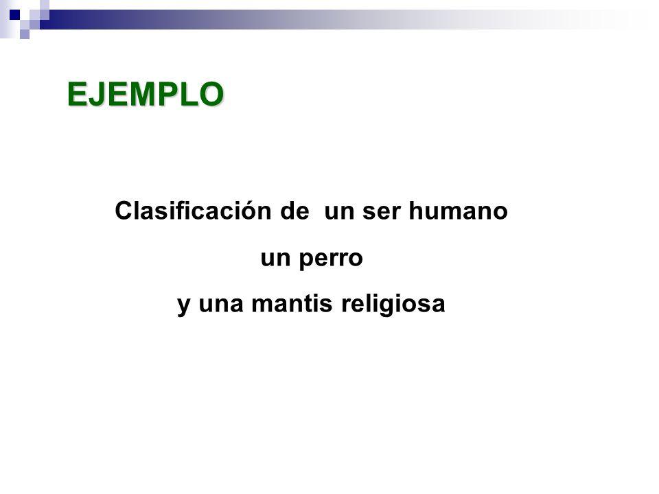 Clasificación de un ser humano