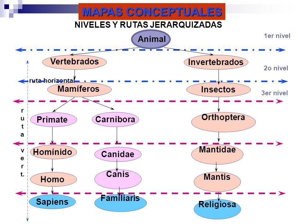 NIVELES Y RUTAS JERARQUIZADAS