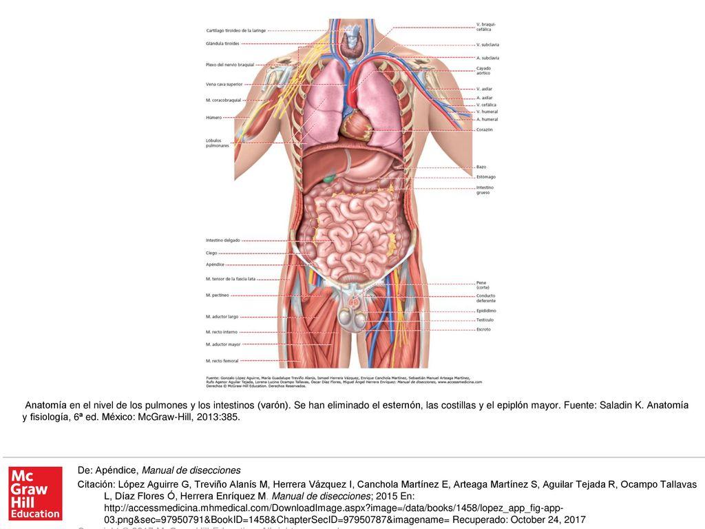 Asombroso Anatomía Para Abridores De Cadera Y Se Inclina Hacia ...