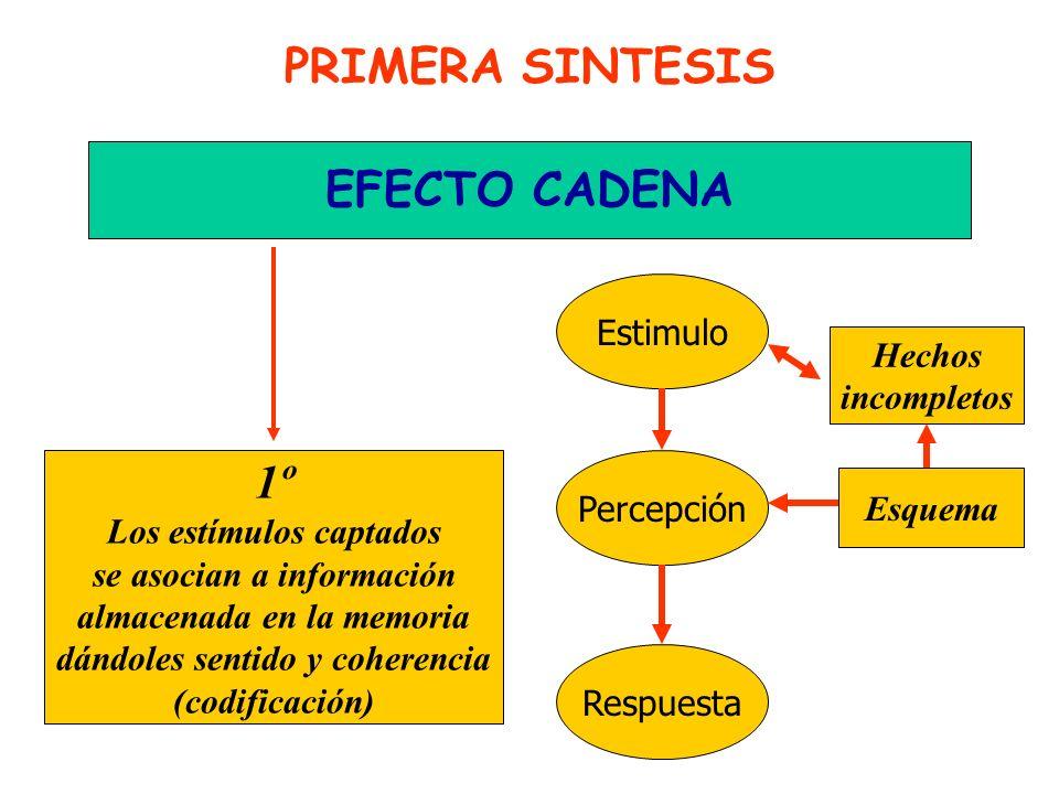 PRIMERA SINTESIS EFECTO CADENA 1º Estimulo Hechos incompletos
