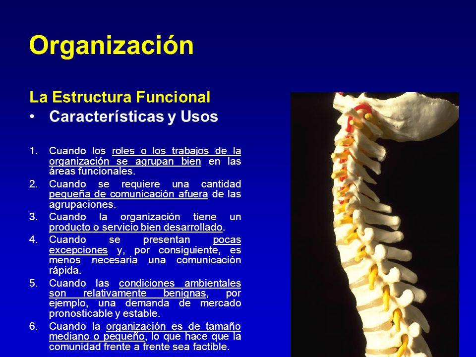 Organización La Estructura Funcional Características y Usos