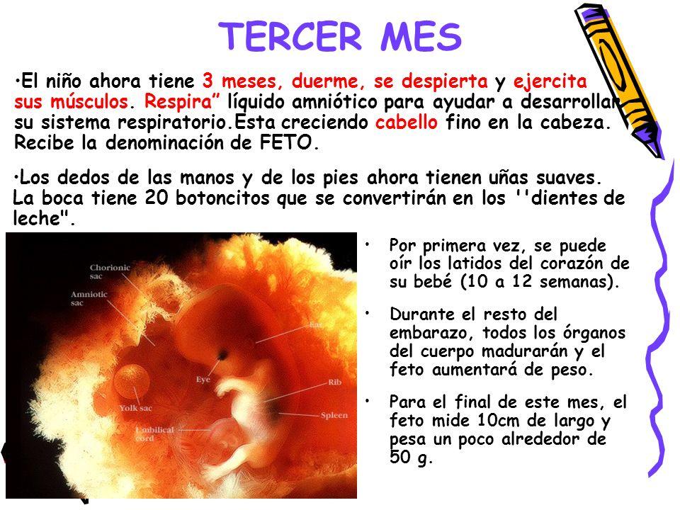 TERCER MES