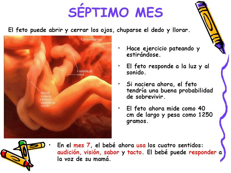 SÉPTIMO MES El feto puede abrir y cerrar los ojos, chuparse el dedo y llorar. Hace ejercicio pateando y estirándose.