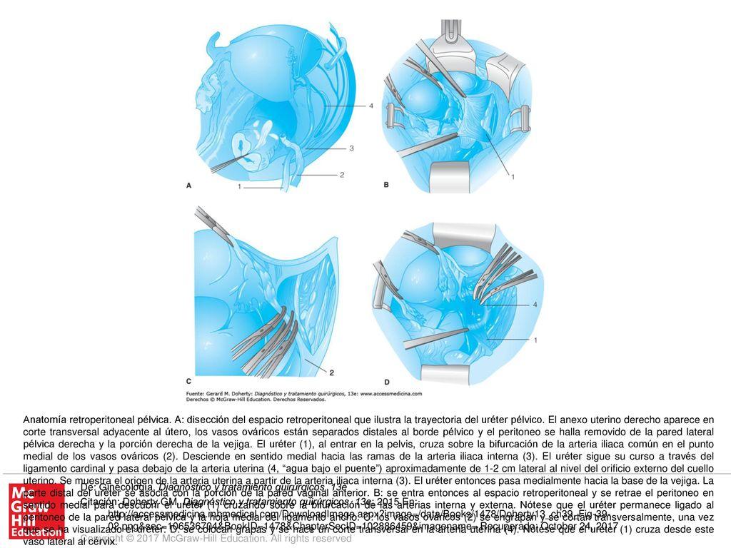 Contemporáneo Lumen Aprendizaje De La Anatomía Y Fisiología ...