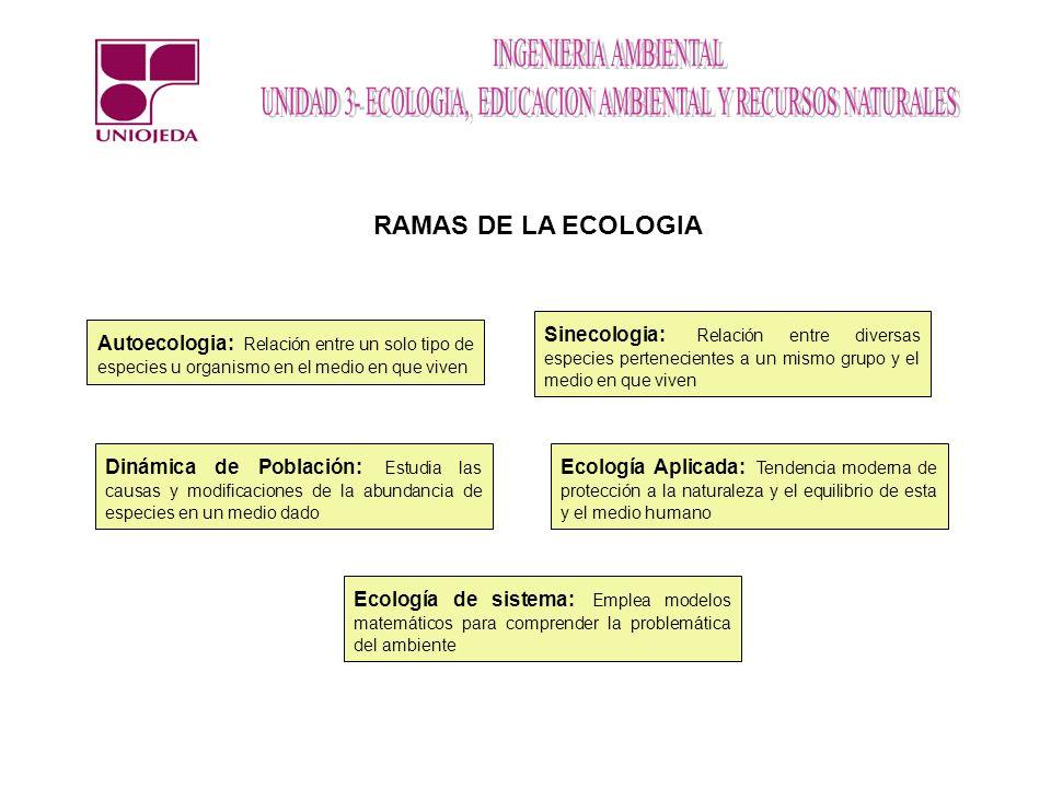 RAMAS DE LA ECOLOGIA Sinecologia: Relación entre diversas especies pertenecientes a un mismo grupo y el medio en que viven.