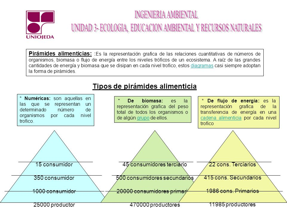 Tipos de pirámides alimenticia