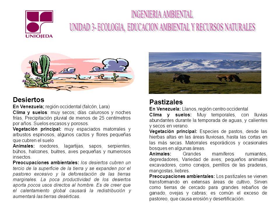 Desiertos Pastizales En Venezuela; región occidental (falcón, Lara)