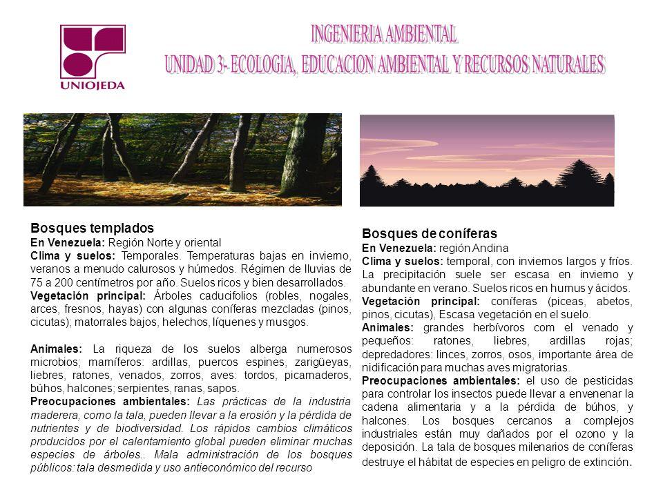 Bosques templados Bosques de coníferas