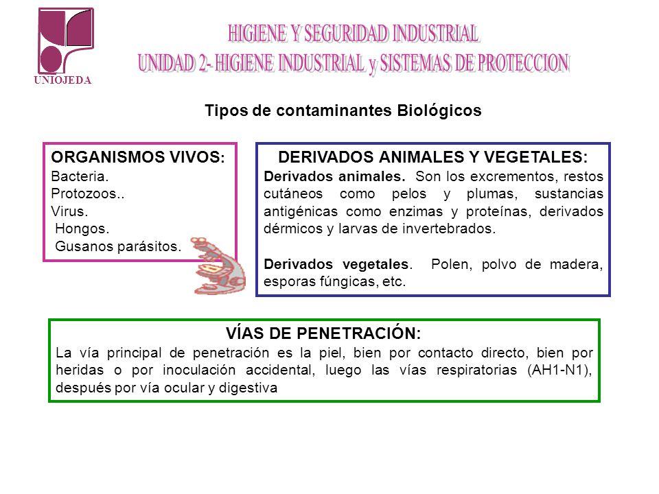 Tipos de contaminantes Biológicos DERIVADOS ANIMALES Y VEGETALES: