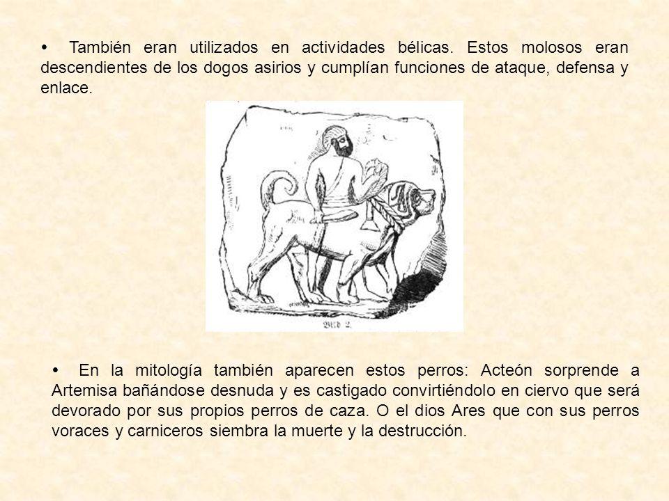  También eran utilizados en actividades bélicas