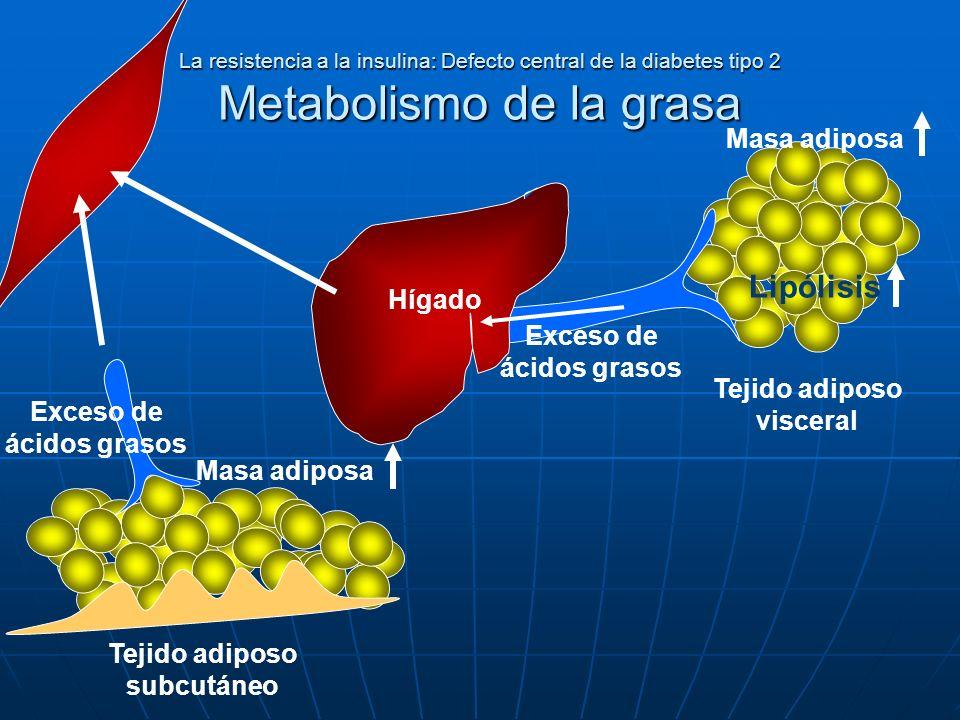 Lipólisis Masa adiposa Hígado Exceso de ácidos grasos
