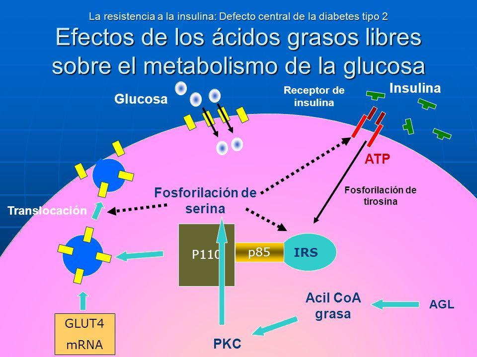 Fosforilación de serina Fosforilación de tirosina